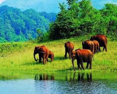 Night  Day Thekkady tour packages