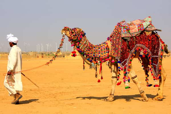 Night  Day Rajasthan  tour packages
