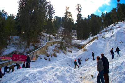 3 Nights 4 Days Shimla honeymoon packages