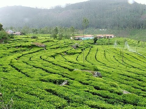 Kodaikanal holiday packages